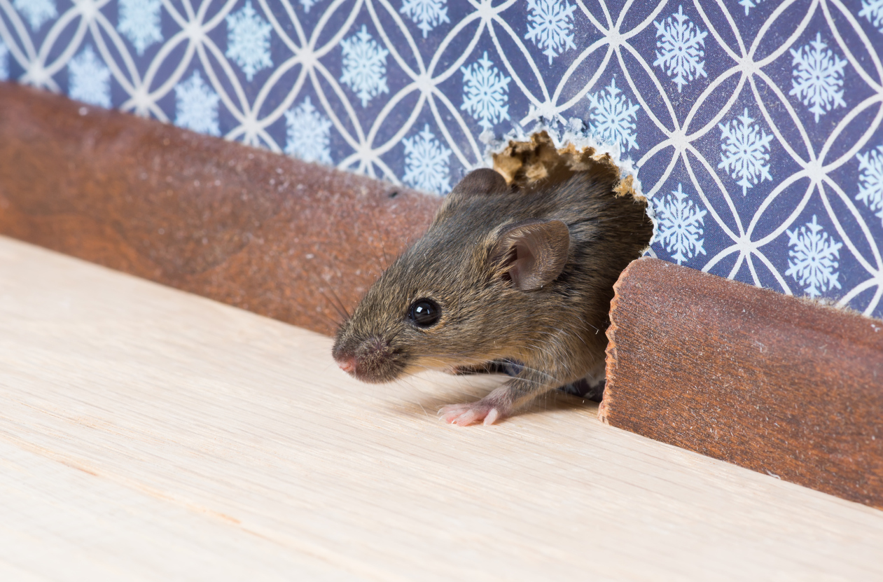 Mouse Control: Evicting Unwanted Tenants