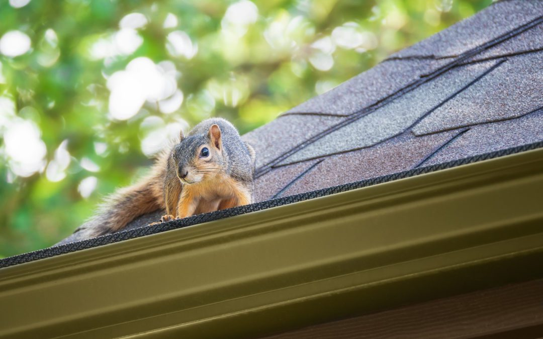 Why is Squirrel Removal Important?