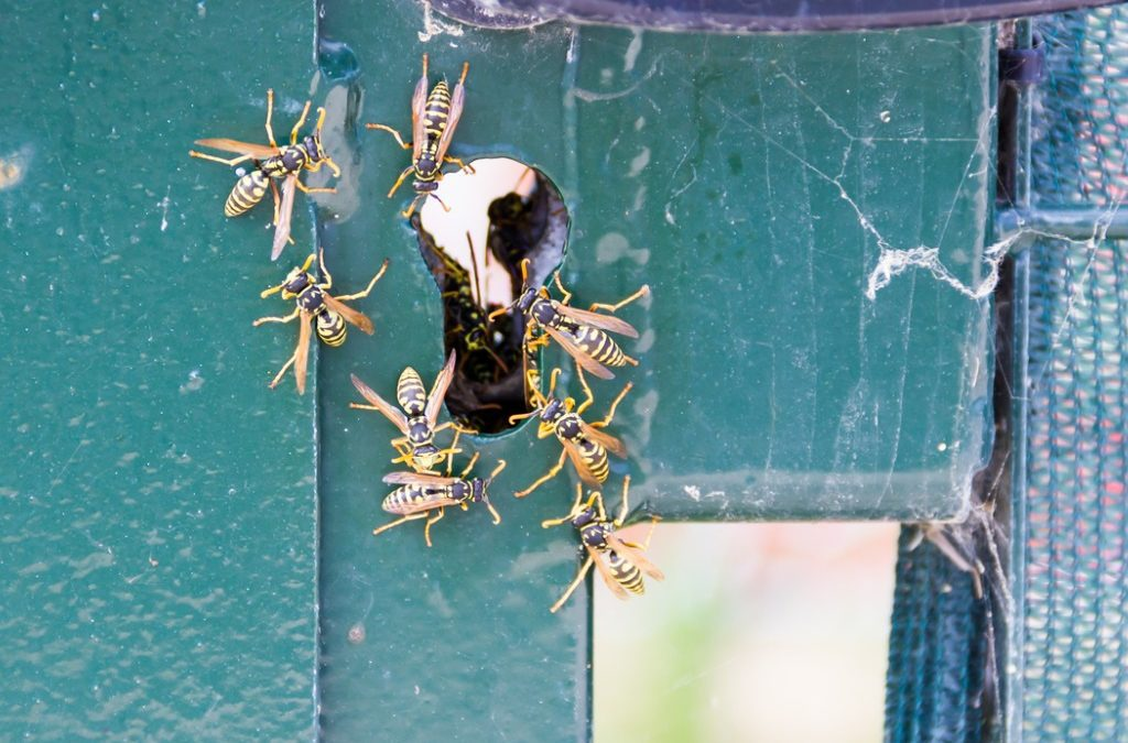 Yellow Jacket Nest Removal Dos and Don'ts